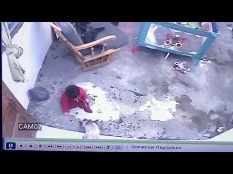 Γάτα αρπάζει και εμποδίζει μωρό να πέσει από τις σκάλες, σε βίντεο από κάμερα ασφαλείας