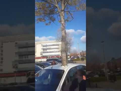 Δέντρο φύτρωσε ξαφνικά μέσα σε αυτοκίνητο. Ταξίδι στο χρόνο; Τηλεμεταφορά; Έργο τέχνης; Έξυπνη φάρσα; Κάποιος μας κάνει πλάκα!