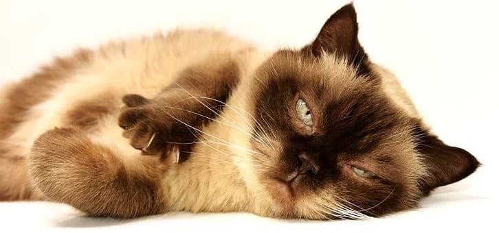Αν το ζώδιο μας ήταν γάτα, τι ράτσα θα ήταν και γιατί