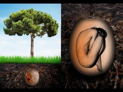 """Οικολογικές ταφές μετατρέπουν τα σώματα σε """"σπόρους"""" για ένα δέντρο"""