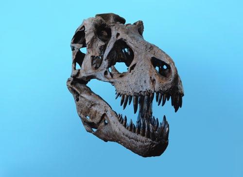 Τεράστιο δεινόσαυρο με ραδιενεργό κρανίο βρήκαν επιστήμονες στην Γιούτα των ΗΠΑ